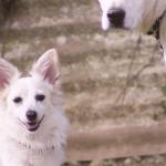 被毛 カラー 犬