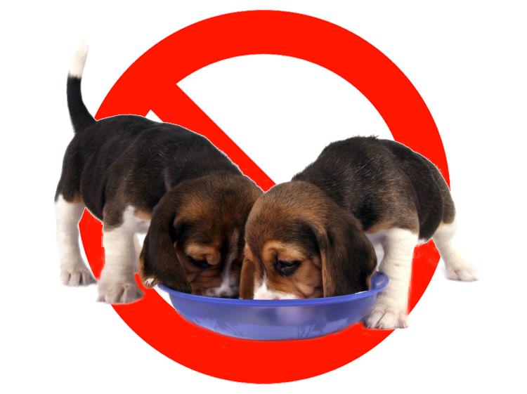 愛犬に食べさせてはいけない食べ物とは