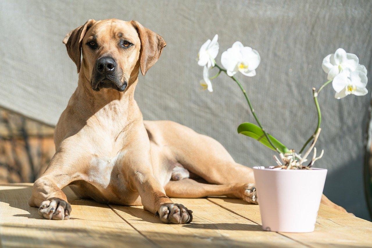 犬の避妊・去勢の手術後は、フードを変えた方がいいの?