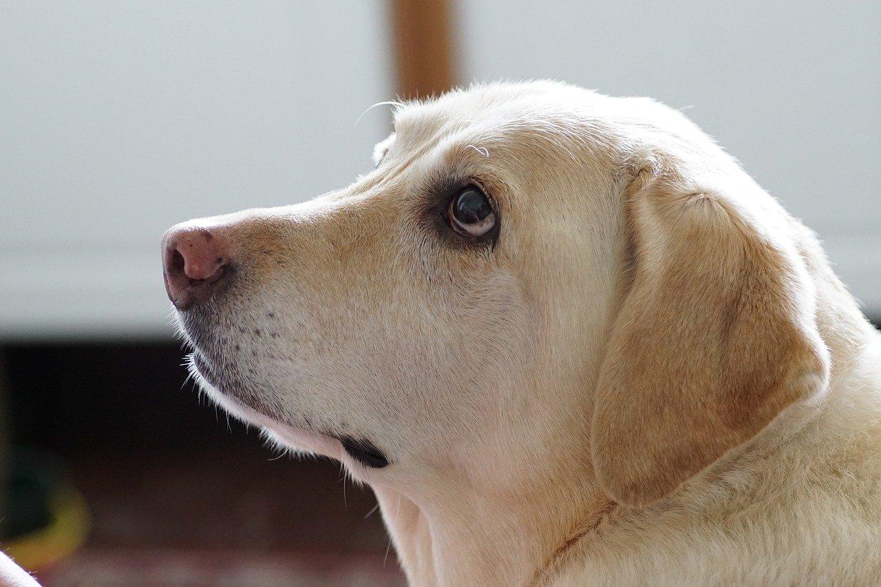 愛犬がご飯を食べてくれない時の原因と対処法
